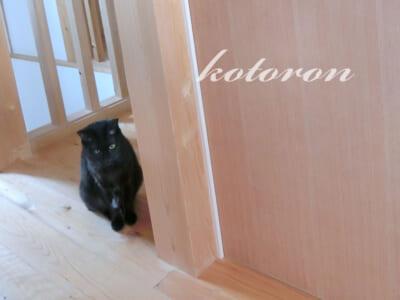 猫の侵入防止・引き戸(スライドドア)を開けられないように